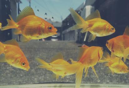 はじめての金魚の絵